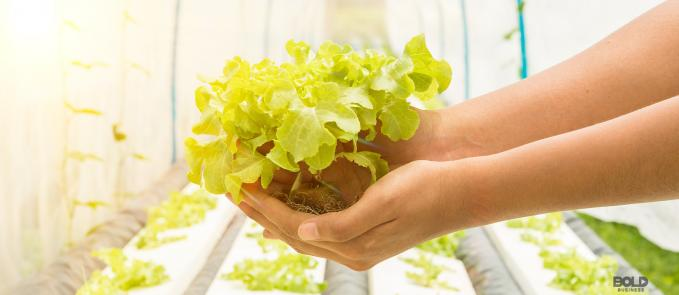 a photo of a plant held by two hands in front of rows of plants grown through indoor farming