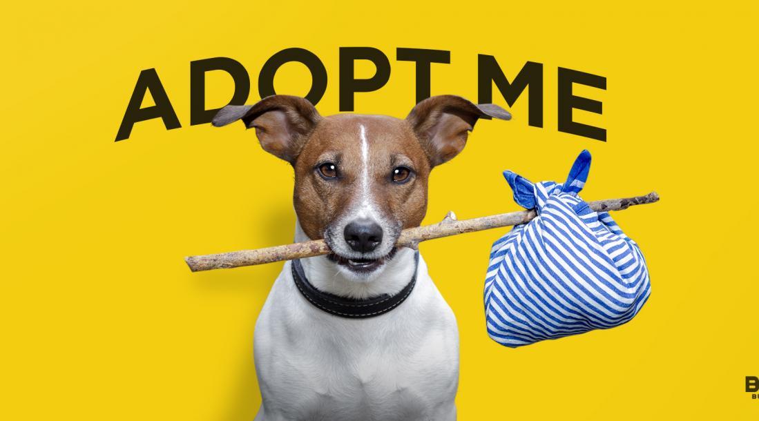 animal adoption, dog biting a stick
