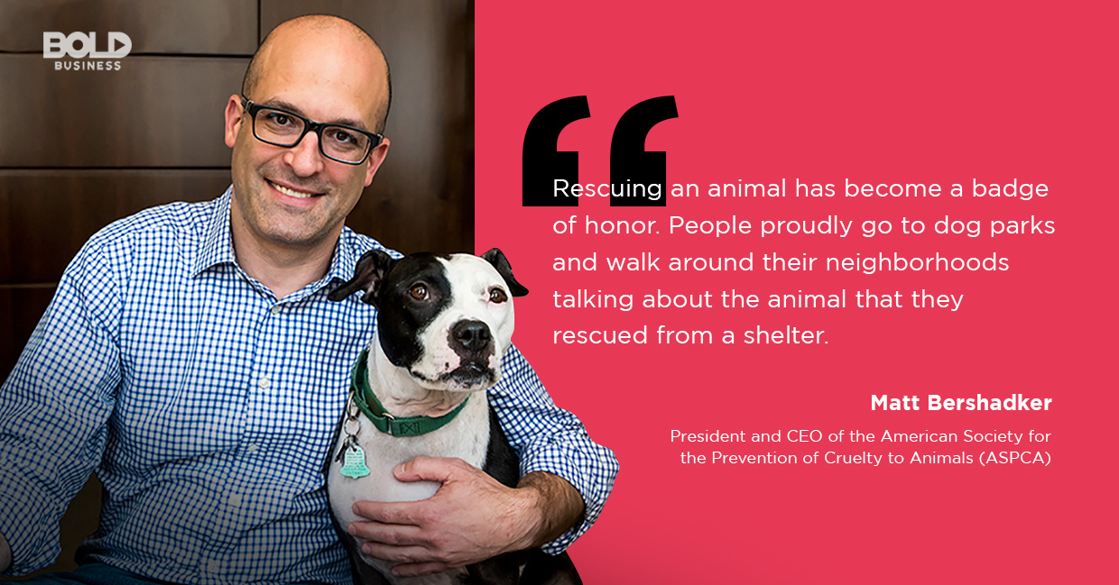pet shelter, matt bershadker quoted