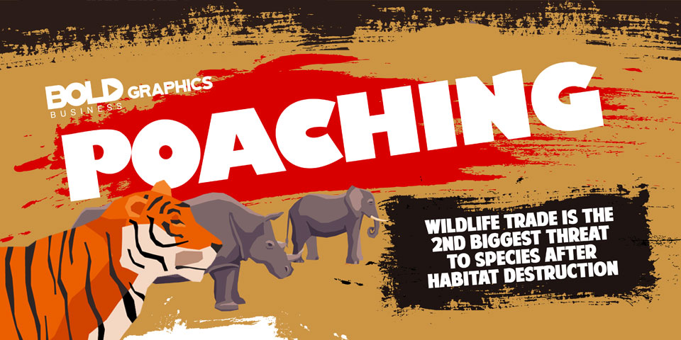 Fighting Poaching Infographic