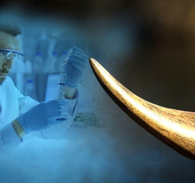 photo of a scientist using stem cells to create a rhino synthetic horn in our attempt to fighting poaching