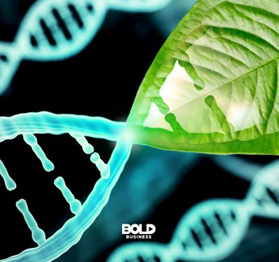 a magnified image of a DNA strand with a section resembling a leaf in relation to the topic of human longevity