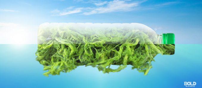 plastic from algae