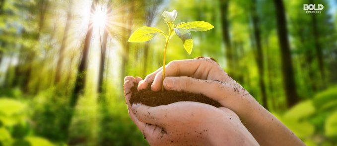 reforestation efforts