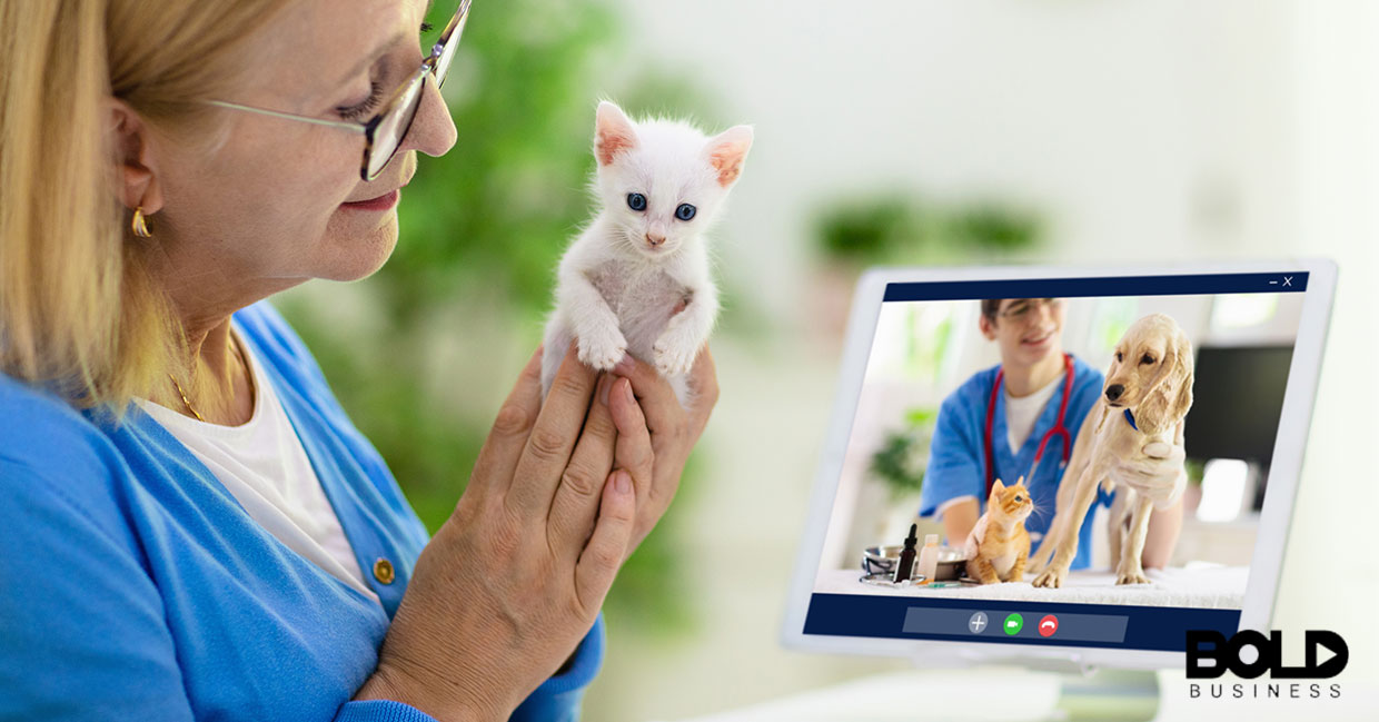Someone showing their kitten to a virtual vet