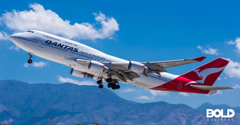 A Qantas flight full of koala bears