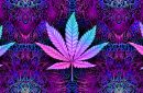 A psychedelic rendering of some marijuana leaves