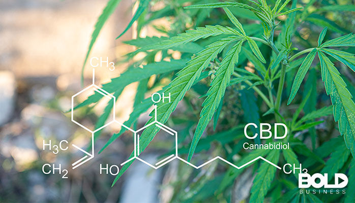 Some marijuana leaves and the chemical composition of cannabis