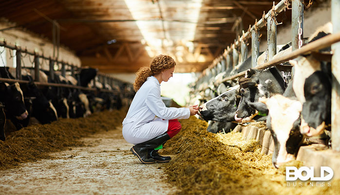 A woman in a lab coat interviewing some cows