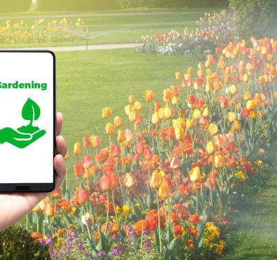 Someone growing tulips via an app