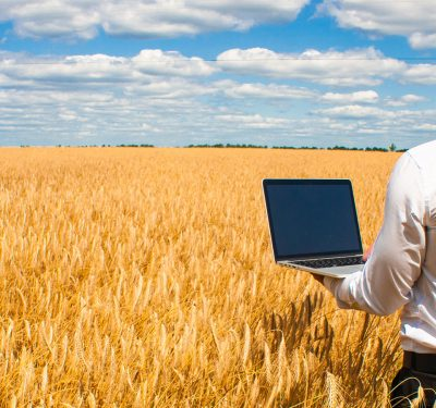A dude using AI on his laptop to count wheat