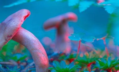Some truly magic mushrooms growing somewhere