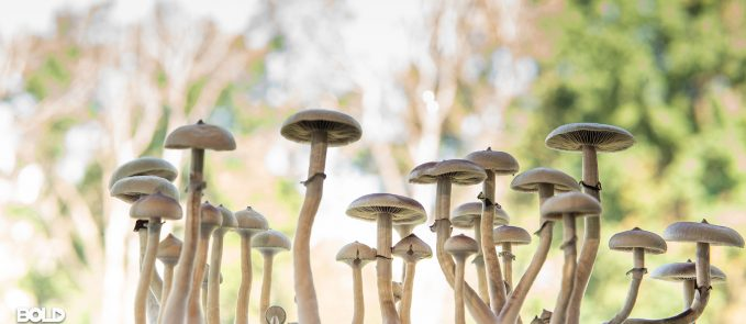 A bunch of mushrooms standing tall and proud